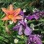 windblown flowers