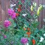 Back fence trellis