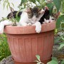 Amazing what will grow in a pot
