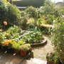 Top garden - veg bed!