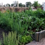vegetable patch in full flow