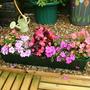 Begonias & Busylizzie