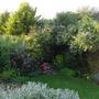 The bottom garden 21.7.11