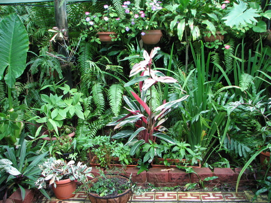 Mid-Winter Downunder - Shadehouse Garden