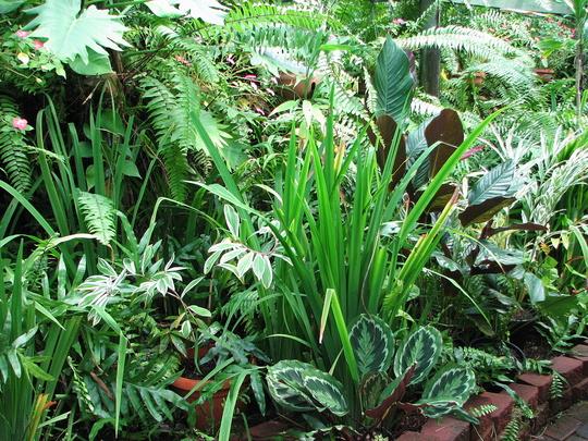 Mid-Winter Downunder - Shadehouse Garden