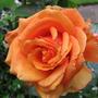 Garden_june_2011_031