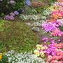 Garden_2194