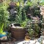 garden for panorama 2011 07 03 032