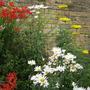 Garden_2244
