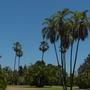 Balboa_park_07_28_11_16_