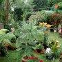 garden last summer