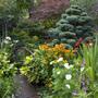 Lower garden: Cedar Atlantica and perennials