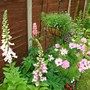 lupins and foxgloves