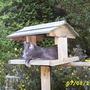 Foxy_bird_table.jpg