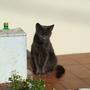 Cats_07_012.jpg