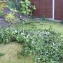 Branch off Tree