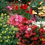 mixed group of bright flowers.