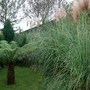 treefern and pampas grass last autumn