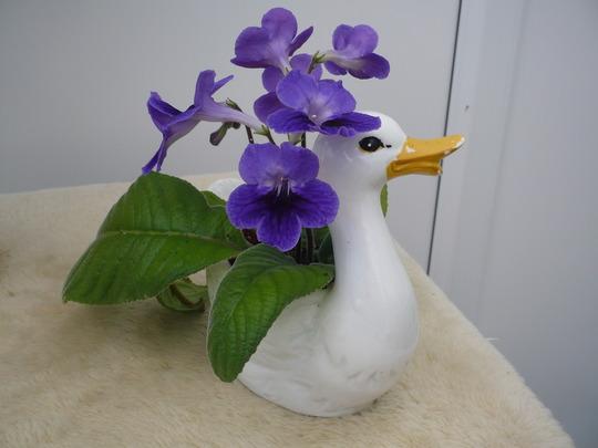 Pellie' Duck