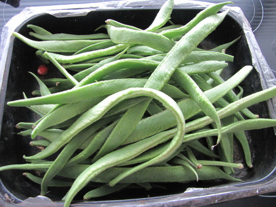 First crop of runner beans at last. (Phaseolus coccineus (Runner bean))