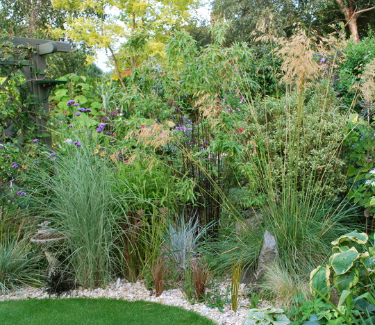 Grass border with black bamboo for Drc  and stipa....