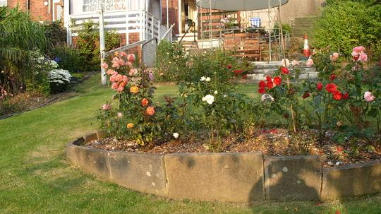 S1050384 oval bed of floribunda roses