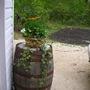 Barrel_planter
