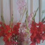gladiola (Gladiolus abbreviatus)