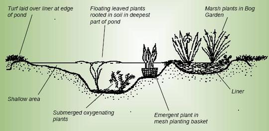 Building a wildlife pond part 1 grows on you for Minimum depth for koi pond