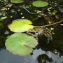 Pond_13