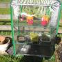 Mini Greenhouse May 2011