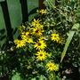August_garden_001