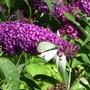 August_garden_014