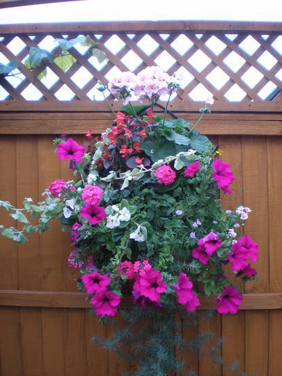 Mixed Hanging basket