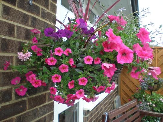 Pinks and Mauve hanging basket