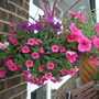 Pinks and Mauve hanging basket
