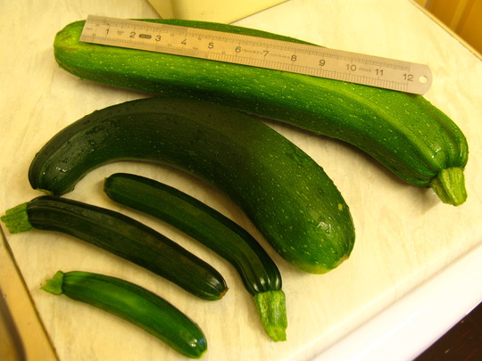 Courgette wars