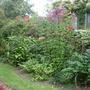 Garden 16th August