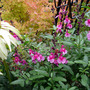 Mid_august_2011_022