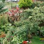 trees and shrubs (photinia conifers and mixed bed)