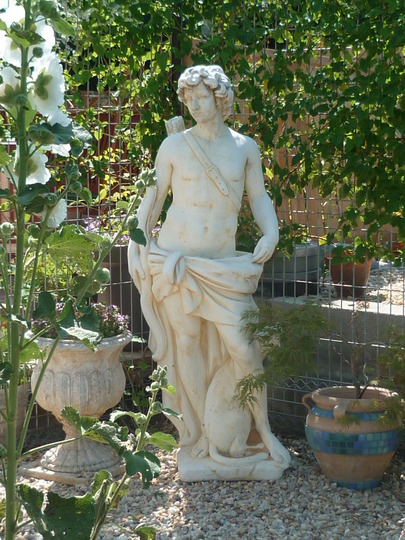 Apollo - for Pixi (Alcea biennis)