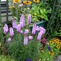 Liatris_and_rudbeckia