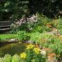 My pond August 2011