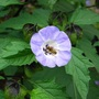 Found in a garden in Worcestershire