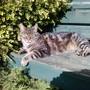 King cat - Bambam in the garden