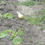 Canary_001