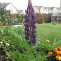 Garden_aug_11_003
