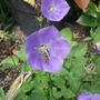 Garden_aug_11_016