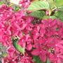 Garden_aug_11_023