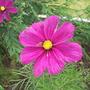Garden_aug_11_005